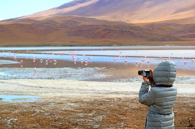 Tourist taking pictures of a big group of pink flamingo at laguna hedionda, the saline lake in potosi, bolivia