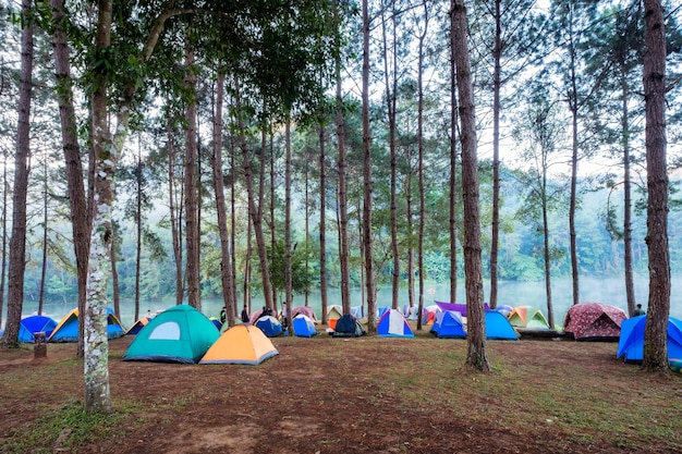 Tourist tent camping in pine forest on reservoir in morning