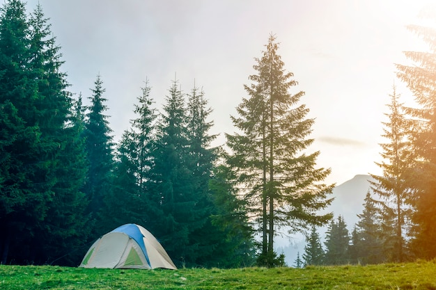 Tourist tent on grassy valley among tall green spruce trees on distant misty blue mountain