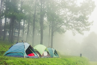Tourist tent in mist & fog. camping in pine tree forest.