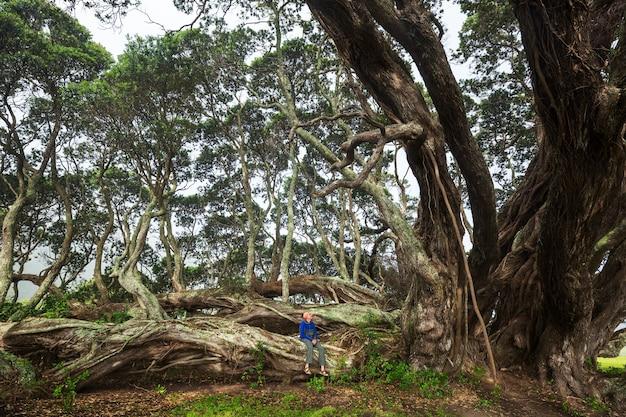 Турист под большим деревом в новой зеландии. концепция wanderlust