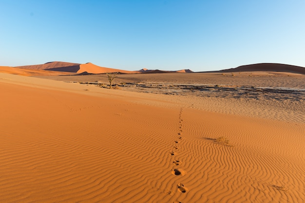 Tourist walking in the majestic namib desert, sossusvlei