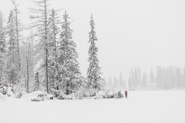 Tourist in winter woods