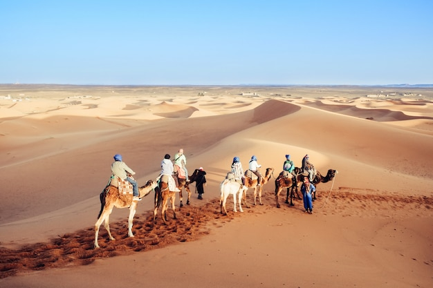 Tourists enjoying with camel caravan in the sahara desert. erg shebbi, merzouga, morocco.