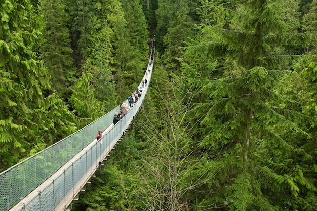 Tourists looking at the view from capilano bridge, near vancouver