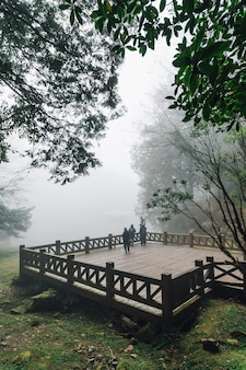 Tourists standing on wooden platform with cedar trees and fog