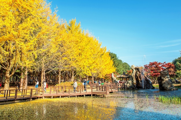 南怡島周辺の秋の美しい風景を写真に撮る観光客