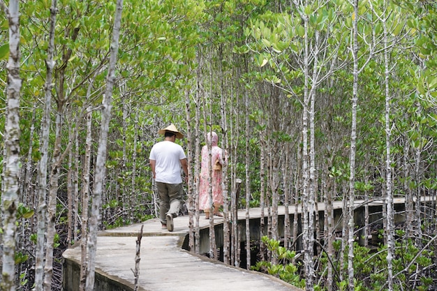 Tourists walking in the mangrove forest
