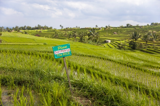Tourists warning sign at rice fields of jatiluwih in southeast bali