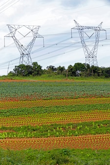 Tower of energy transmission in horticulture farm area