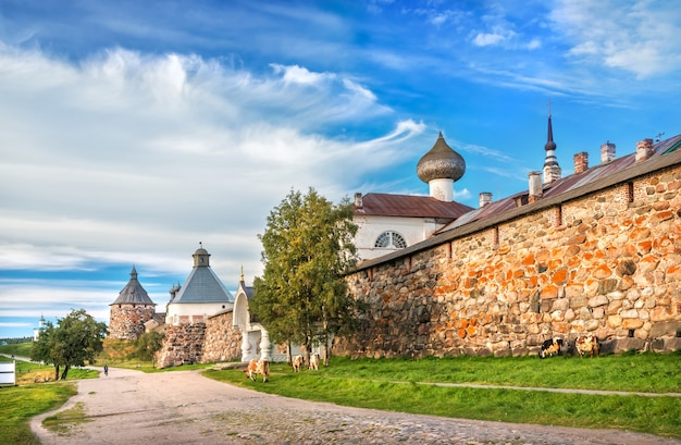 Towers of the solovetsky monastery and cows graze near the walls on the solovetsky islands in the rays of the autumn sun
