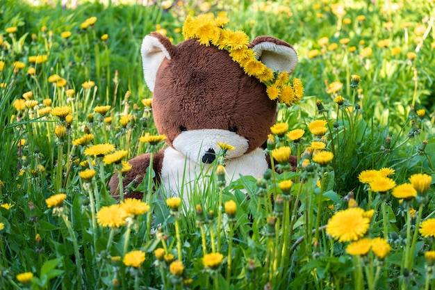 Toy bear in the field, among dandelion flowers with a wreath on his head, sunny summer day