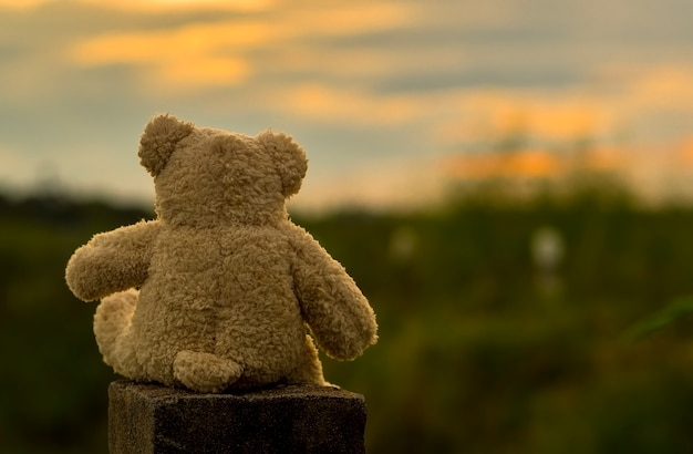 Toy bear sitting and sunset background.