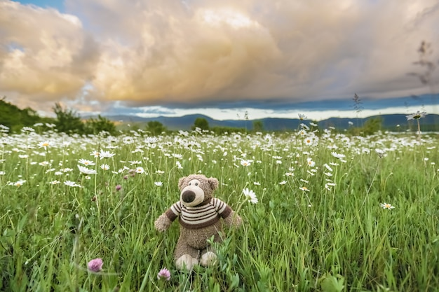 A toy teddy bear stands in the tall green grass in a meadow with daisies