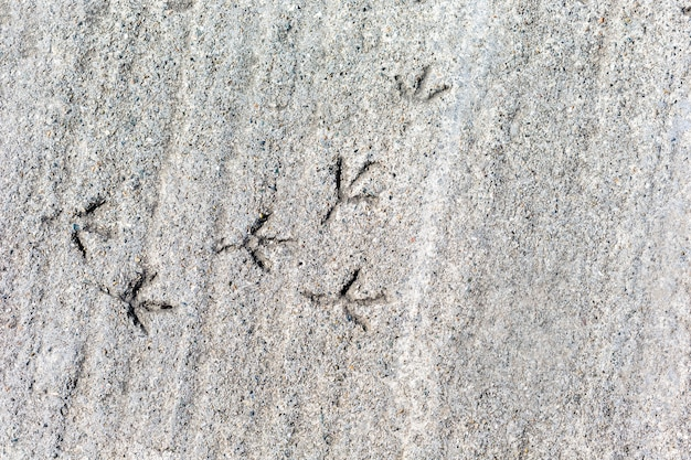 Traces of a bird on concrete of gray background