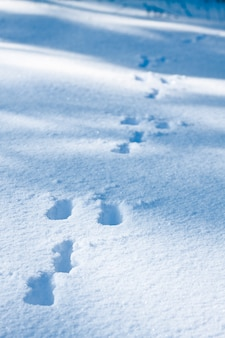 Traces of a hare