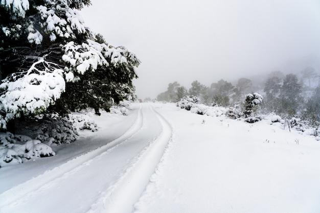 丘陵地の雪上での車のタイヤ跡の痕跡。