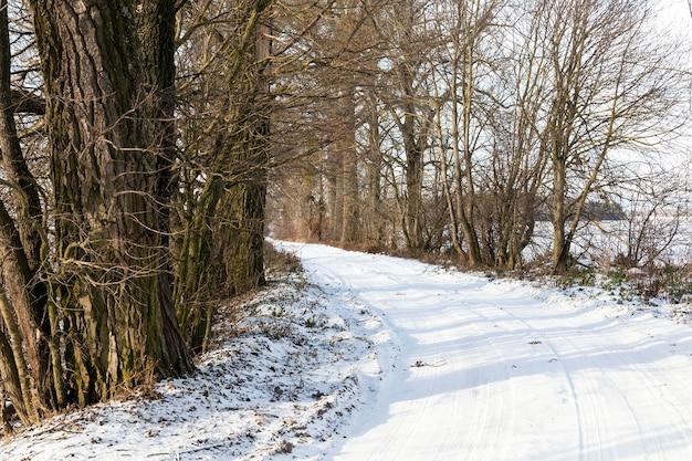 눈 위의 트레드 흔적. 도로의 겨울철에 눈이 덮여 있습니다. 근접 촬영 사진. 프레임의 하늘과 나무
