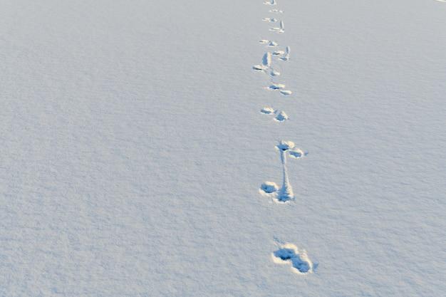 Следы животных на белом снегу