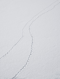 A track of footprints in the snow is a fading perspective. bird tracks in the snow