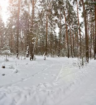 Трасса в снегу зимняя лесная дорога без людей следы колес и шин внедорожника через сугроб