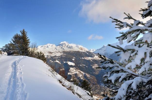 알파인 산 꼭대기의 보도에 신선한 눈이 내리는 트랙과 눈 덮인 전나무 가지