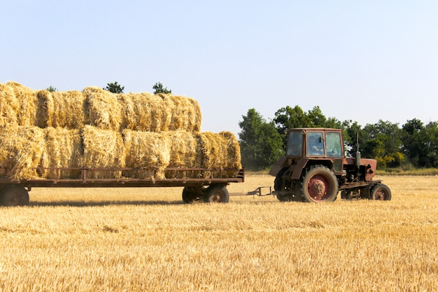 Tractor carrying hay bale rolls - stacking them on pile.