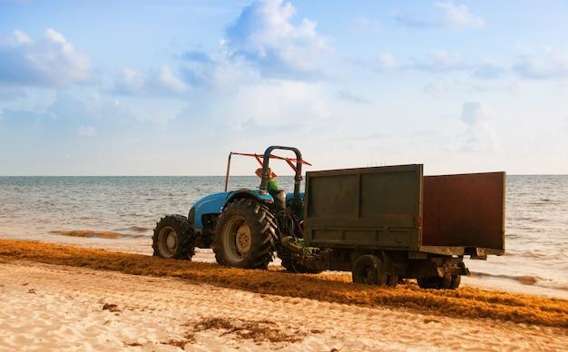 海藻からビーチを掃除するトラクター。ドミニカ共和国大西洋岸。