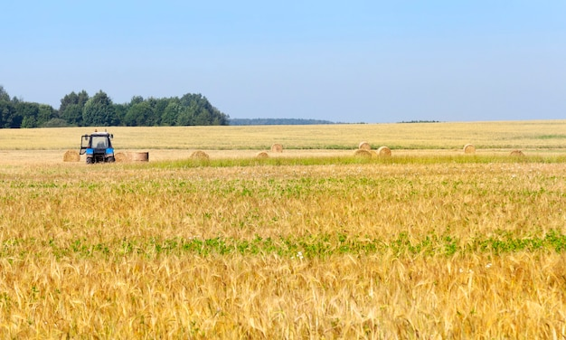 収穫会社でライ麦わらの山を集めるトラクター。青い空の写真。農業機械に焦点を当てる