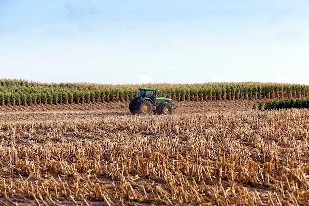 Трактор собирает зрелый урожай кукурузы со скошенными пожелтевшими стеблями растения крупным планом в осеннем сезоне голубое небо.