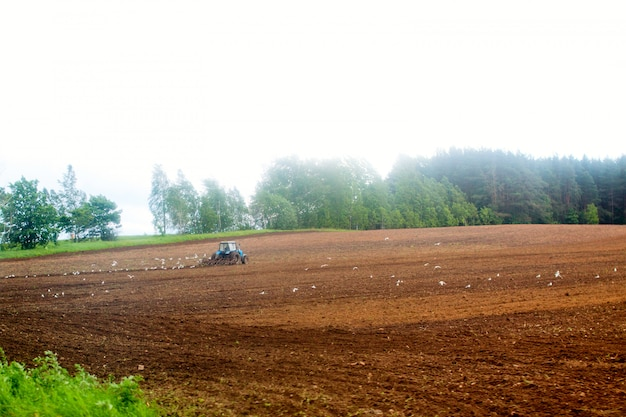 Tractor harrow at the field
