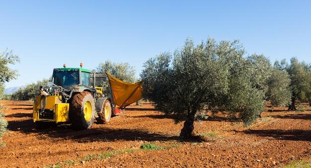 農業プラントでブラックオリーブを収穫するトラクター