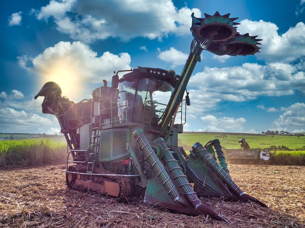 日没時に畑でサトウキビを収穫するトラクター