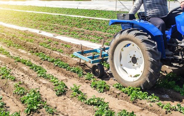 トラクターのすきは、若いリビエラ品種のジャガイモのプランテーションの土地を緩めます