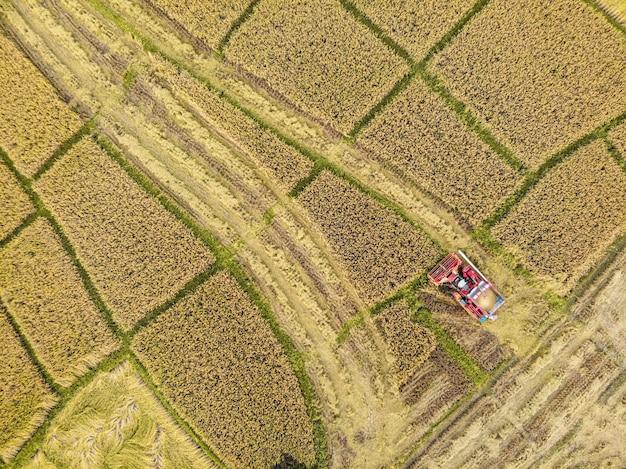 Tractor in a rice farm on harvesting season
