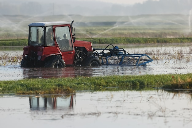 Tractor threshed the bushes of cranberries during a harvest at the farm