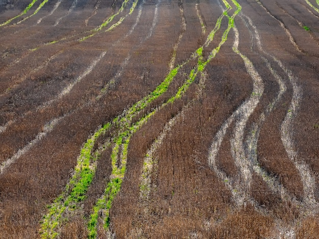 Tractor tracks on a harvested autumn field, aerial view.