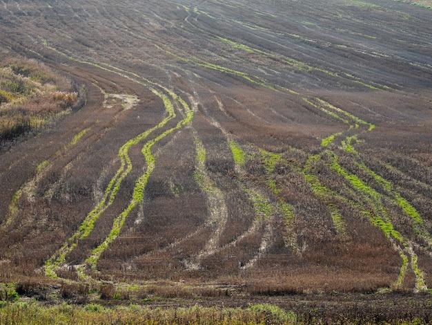 収穫された秋の畑のトラクタートラック、曲線の自然なパターン、空中写真