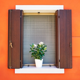 Traditional colorful walls and windows with opened shutters and flowers in the pot.