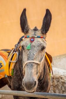 Traditional donkey on stairs in thira, santorini island, greece