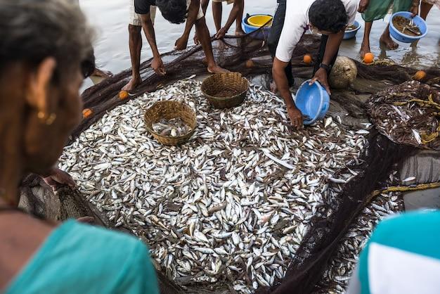 Традиционная рыбалка индия
