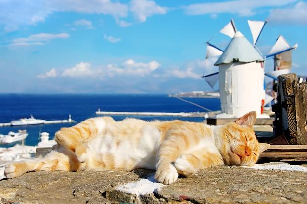 전통적인 그리스-그리스 고양이와 그리스 풍차. 미코노스 섬