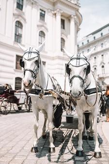 Традиционный конный тренер fiaker в вене