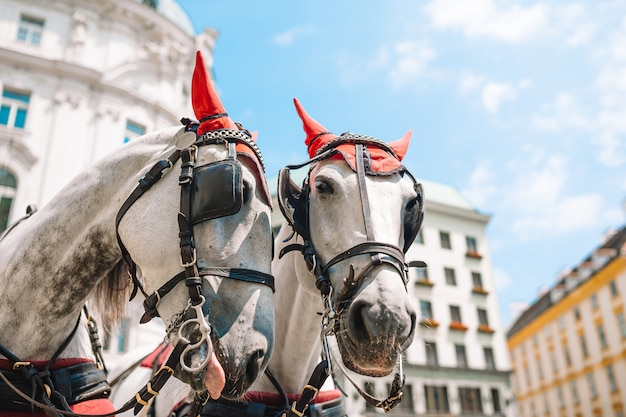 Traditional horse coach fiaker in vienna austria