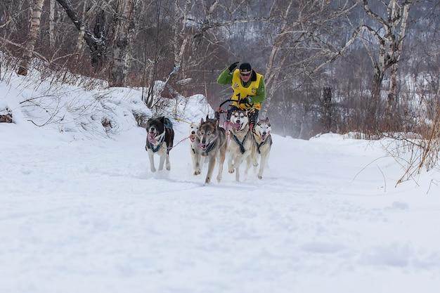 伝統的なカムチャツカ犬ぞりレースエリゾフスキースプリント