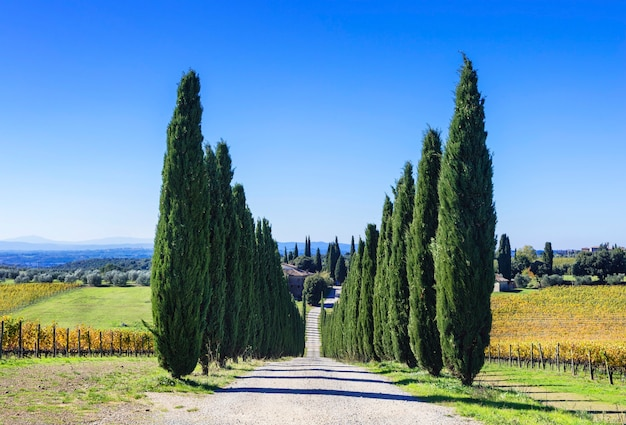 トスカーナの伝統的な風景-ブドウ園とヒノキ。イタリア