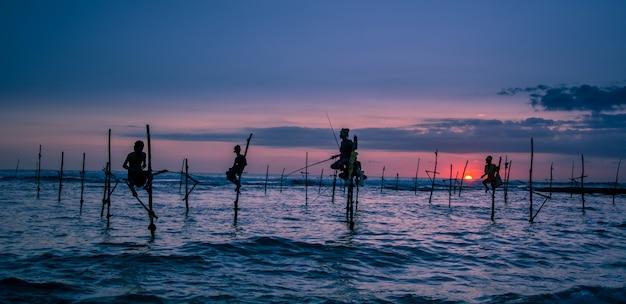 Традиционный рыбак на сваях в шри-ланке