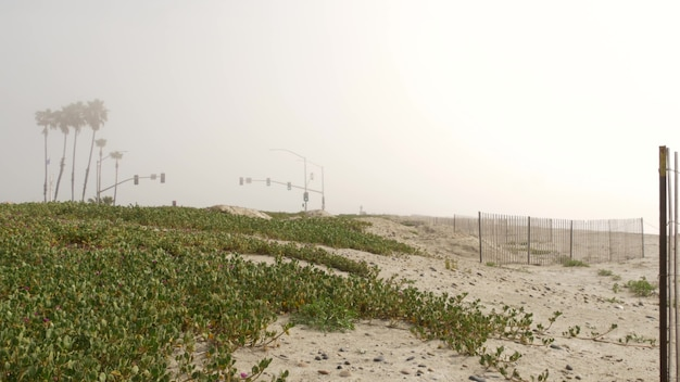 Traffic light semaphore, highway road by sandy misty beach, encinitas california usa. pacific ocean coast, fog on sea shore. coastline near los angeles, palms in smog haze. gloomy weather on shoreline