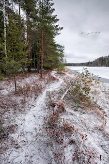 冬の雪の森の近くの凍った湖の岸に沿ってトレイル