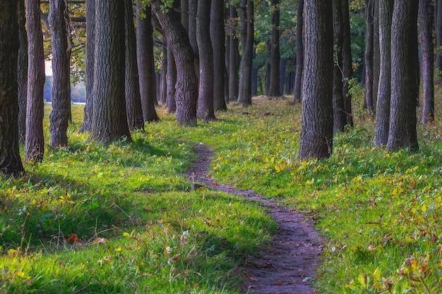 夏の鬱蒼とした森の木々の間をたどる_